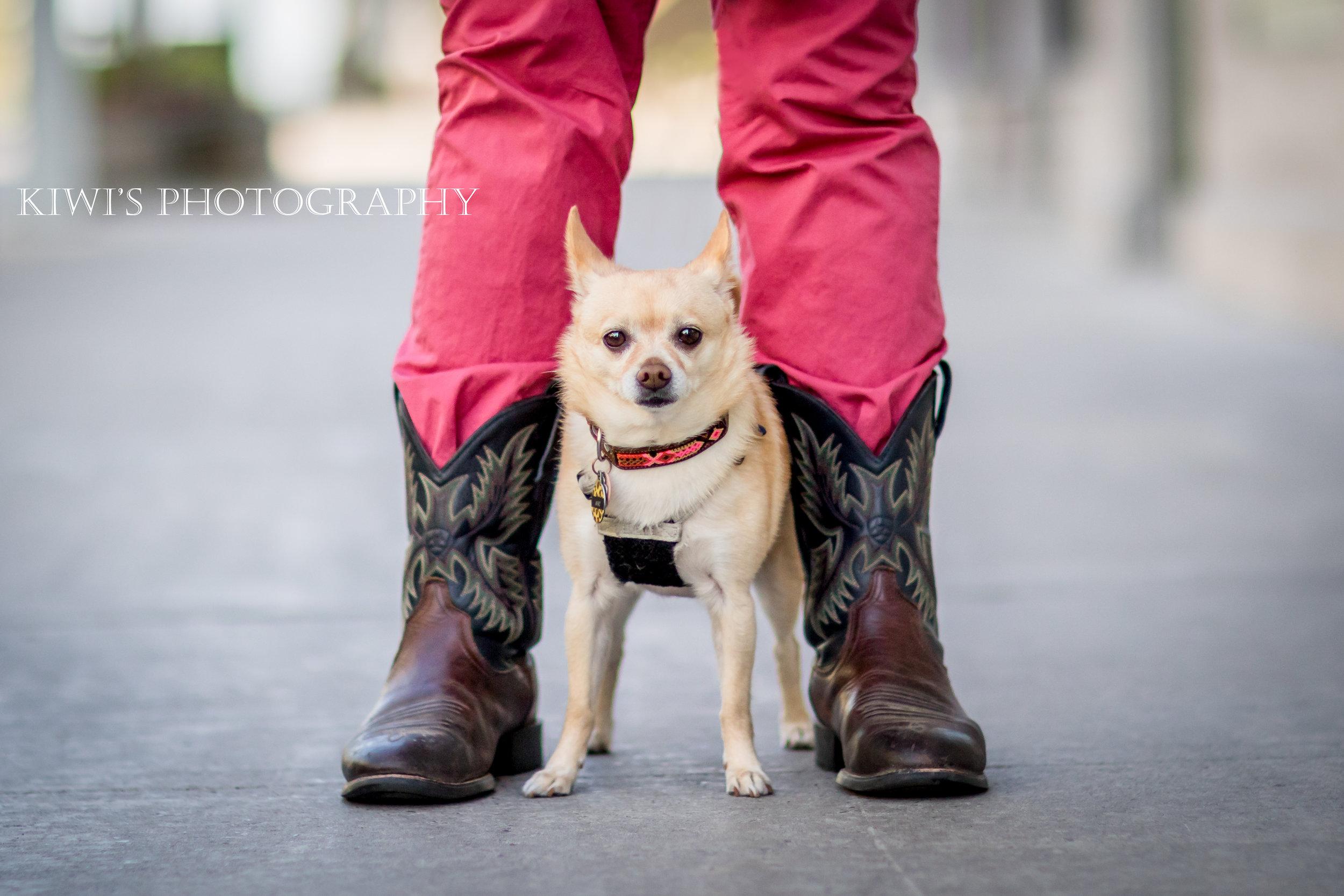How I Met my Best Friend - Ellis & Mac A. Roni - ottawa pet photographer