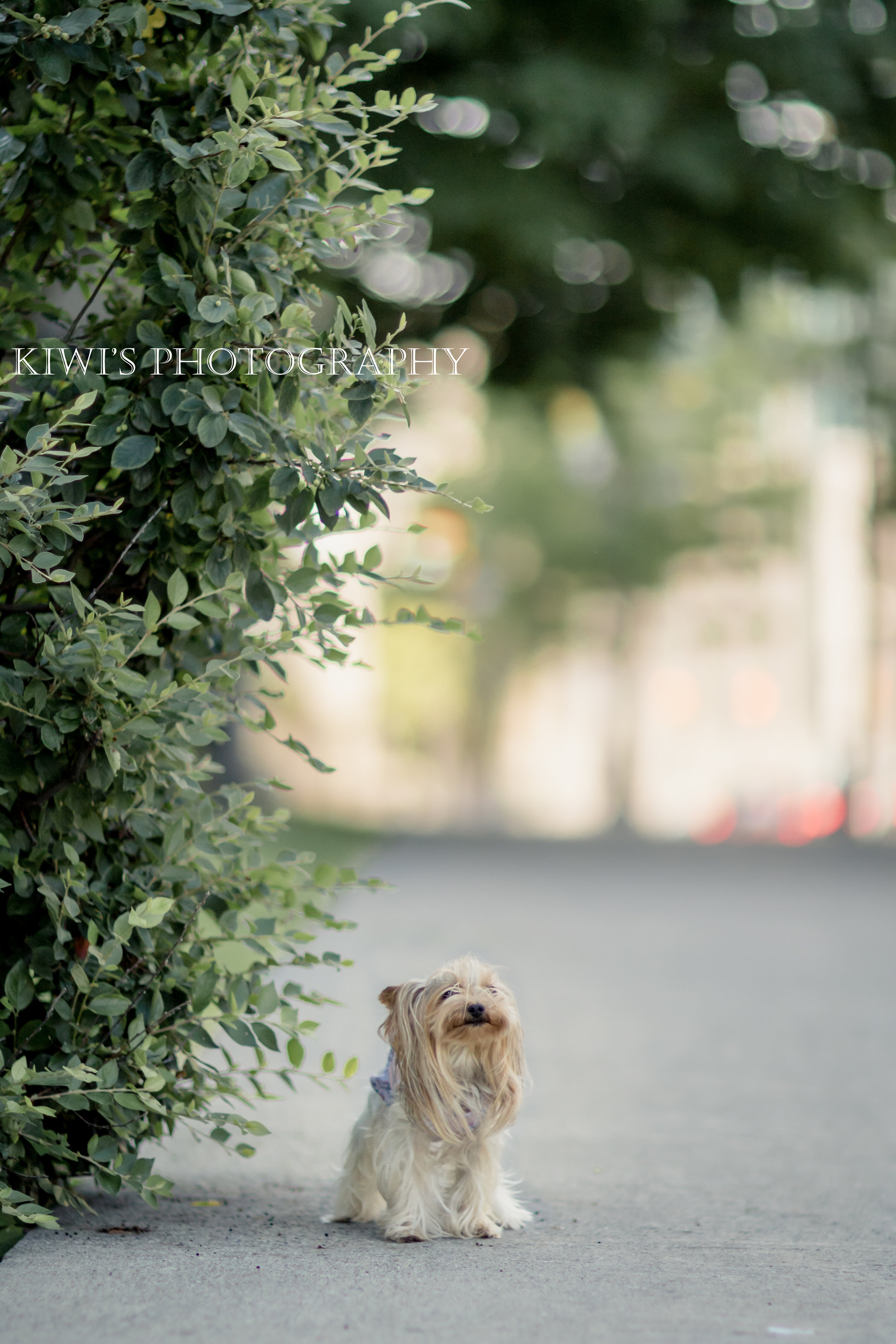 ottawa pet photographer - how i met my best friend - jessica and rini