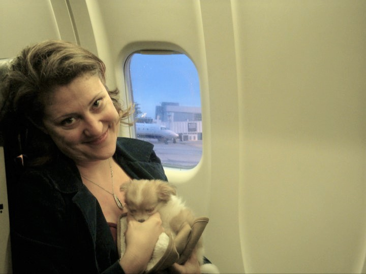 Montecristo on his first flight when Sonja picked him up from the breeder (Photo courtesy of Sonja).