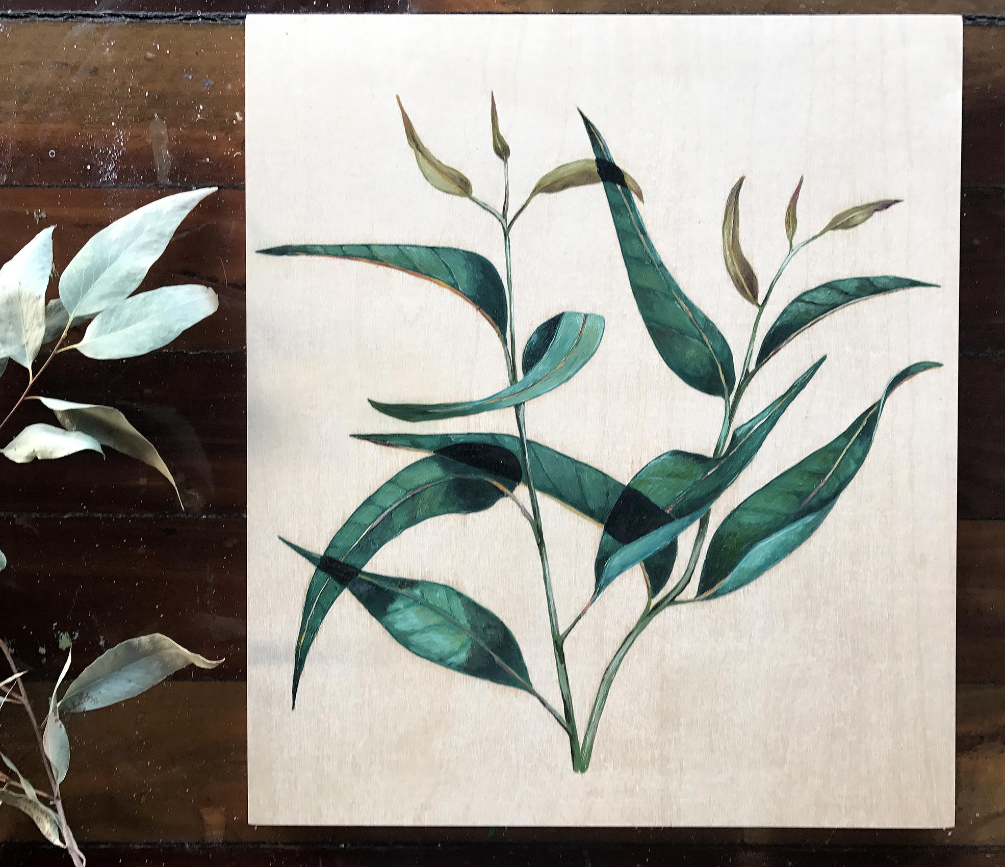 Green Blue Eucalyptus