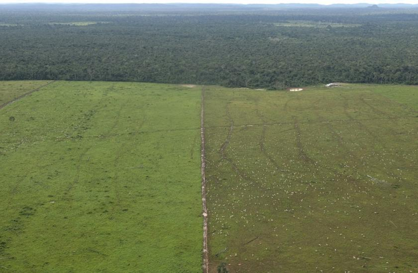 Cattle Farm / Deforestation in the Amazon, Brazil