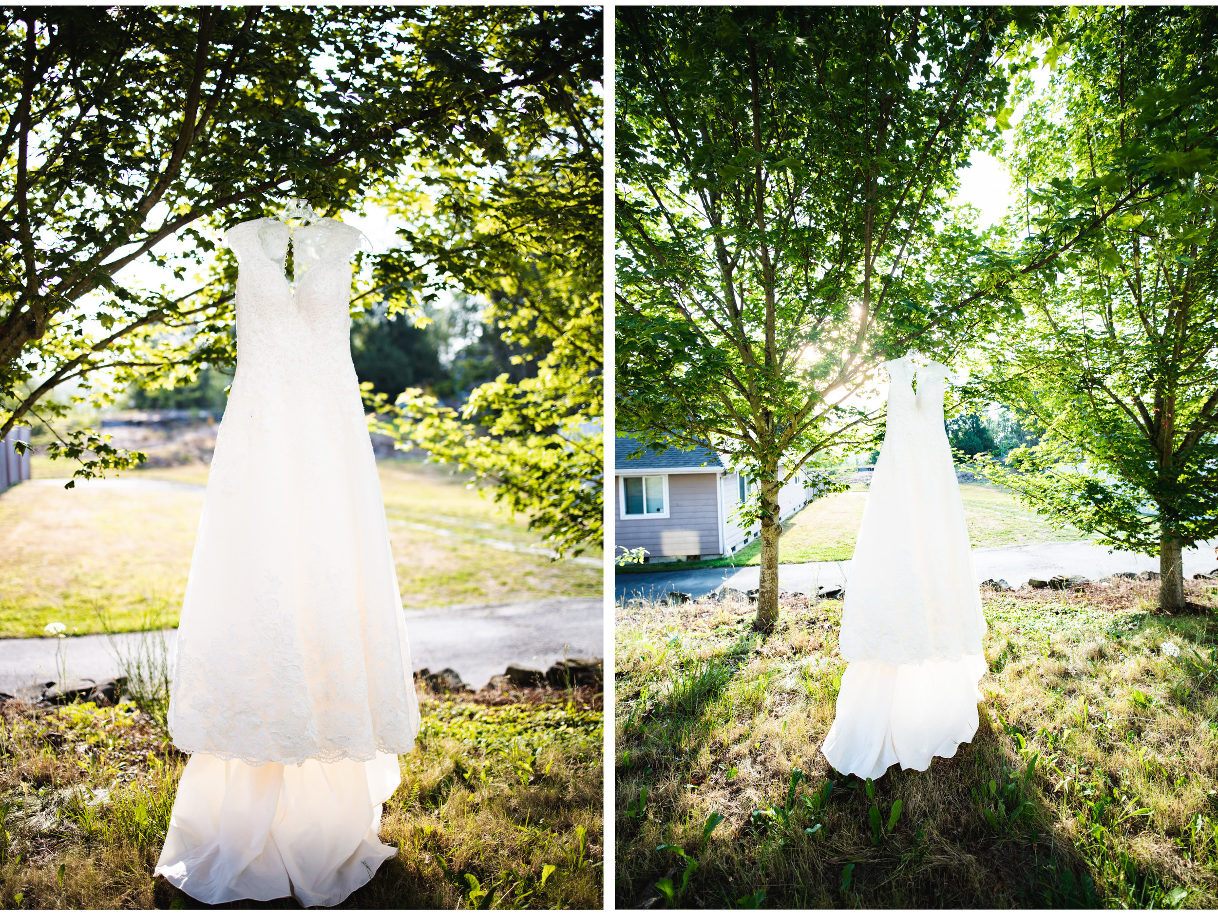 Wedding Dress on Tree.jpg