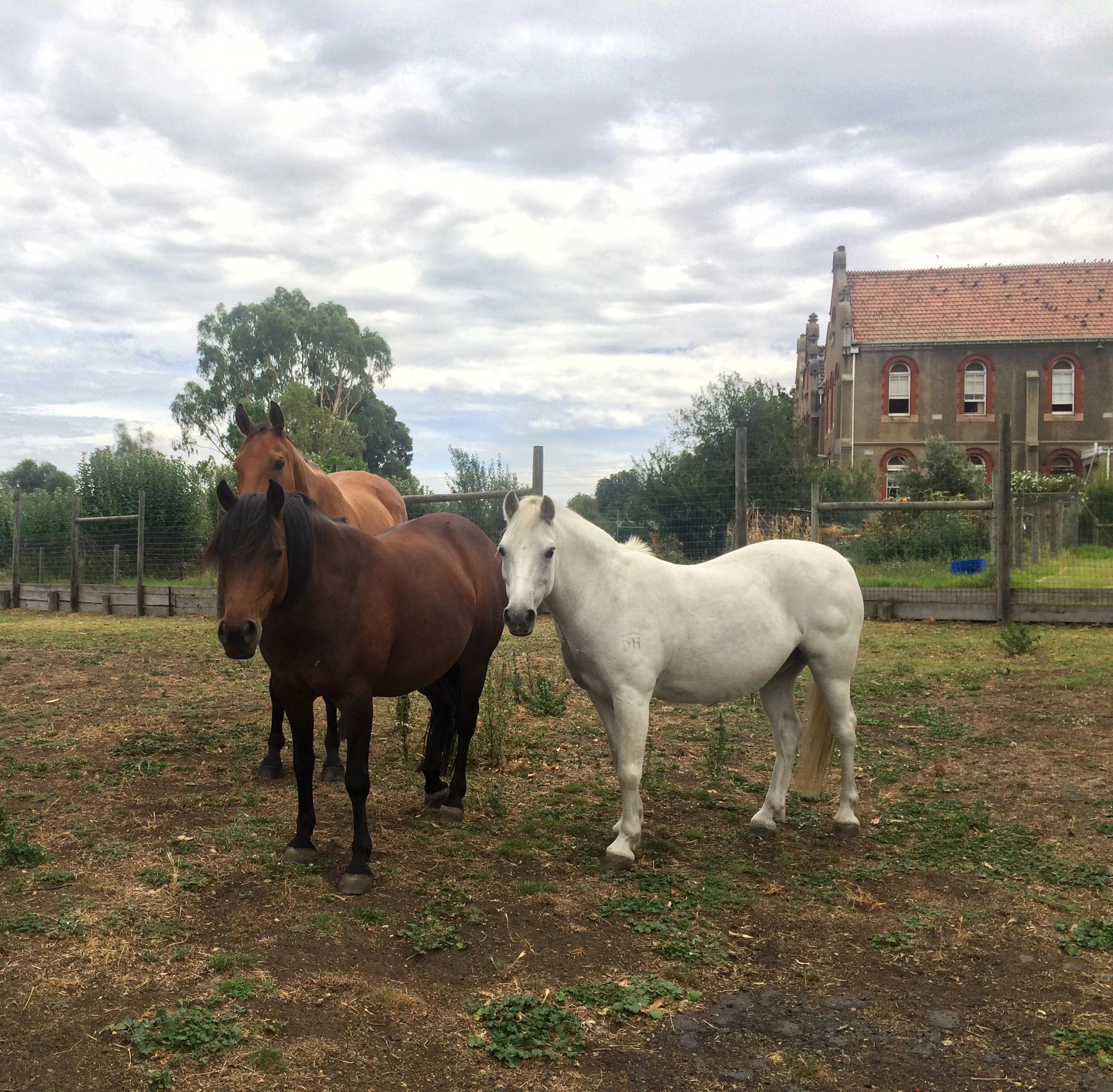 horsies.jpg