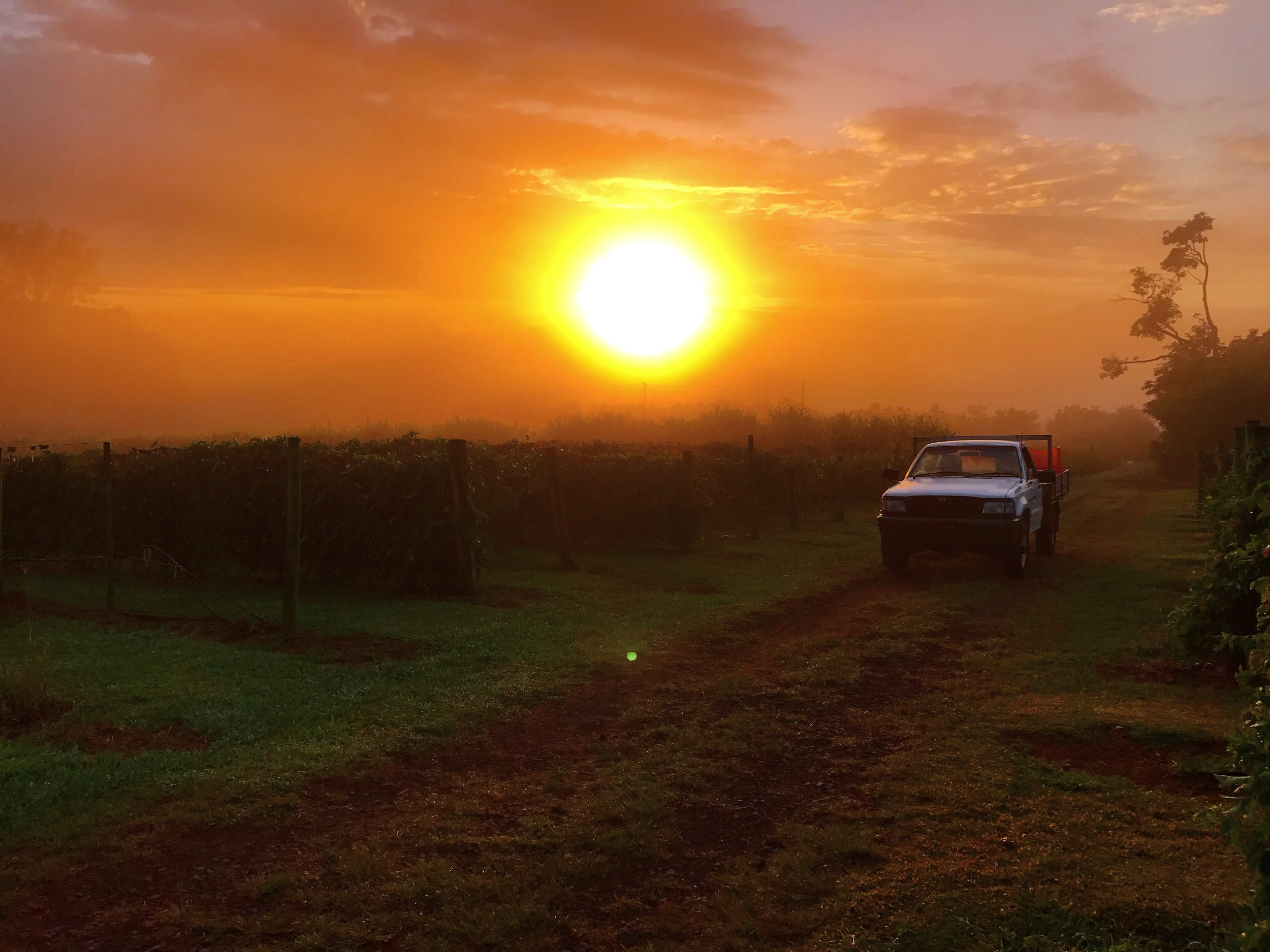 The sun rising at 6:30am on the passionfruit farm