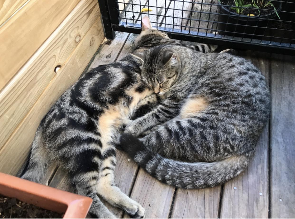 Cat cuddles.
