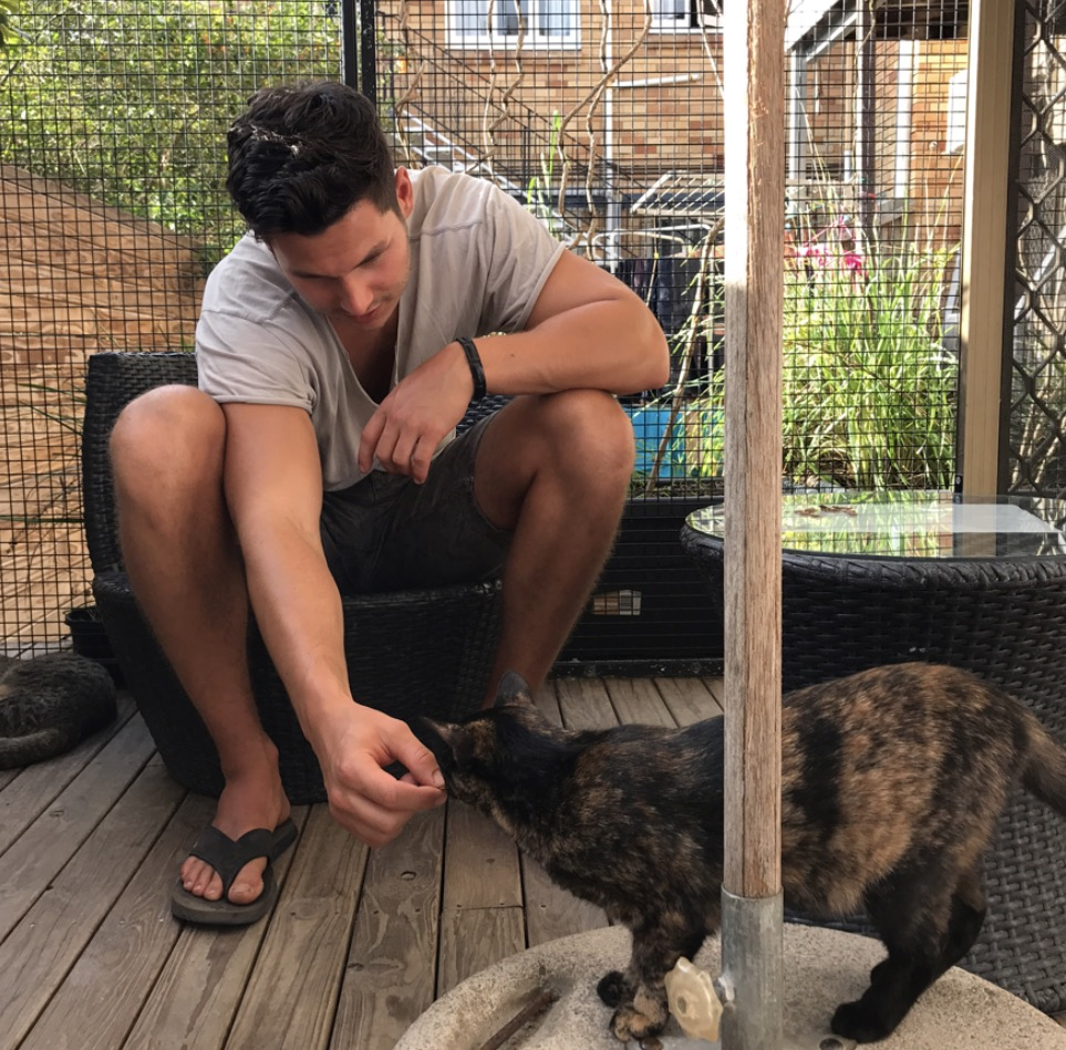 Henrik playing with the kitties.