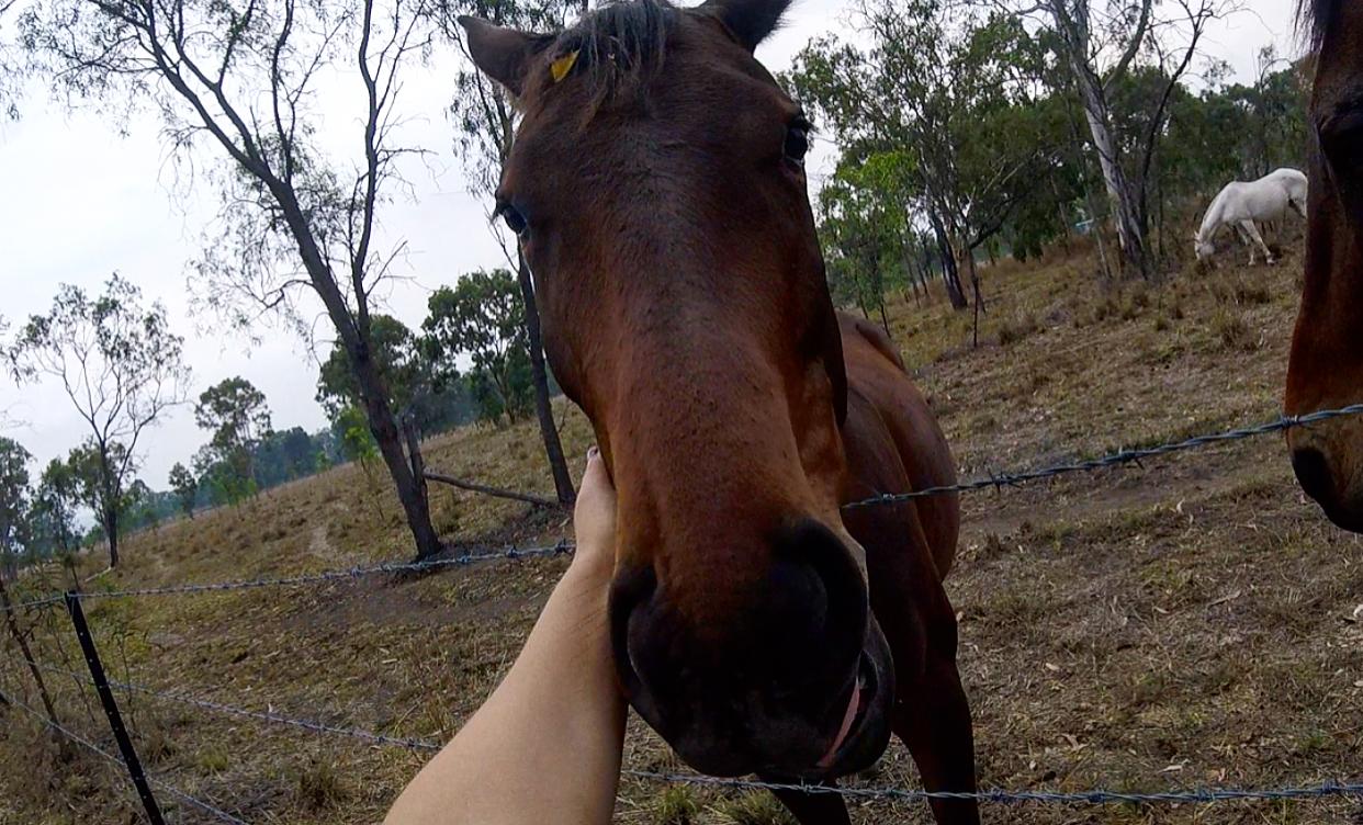 The beautiful horses that I woke up to one morning.