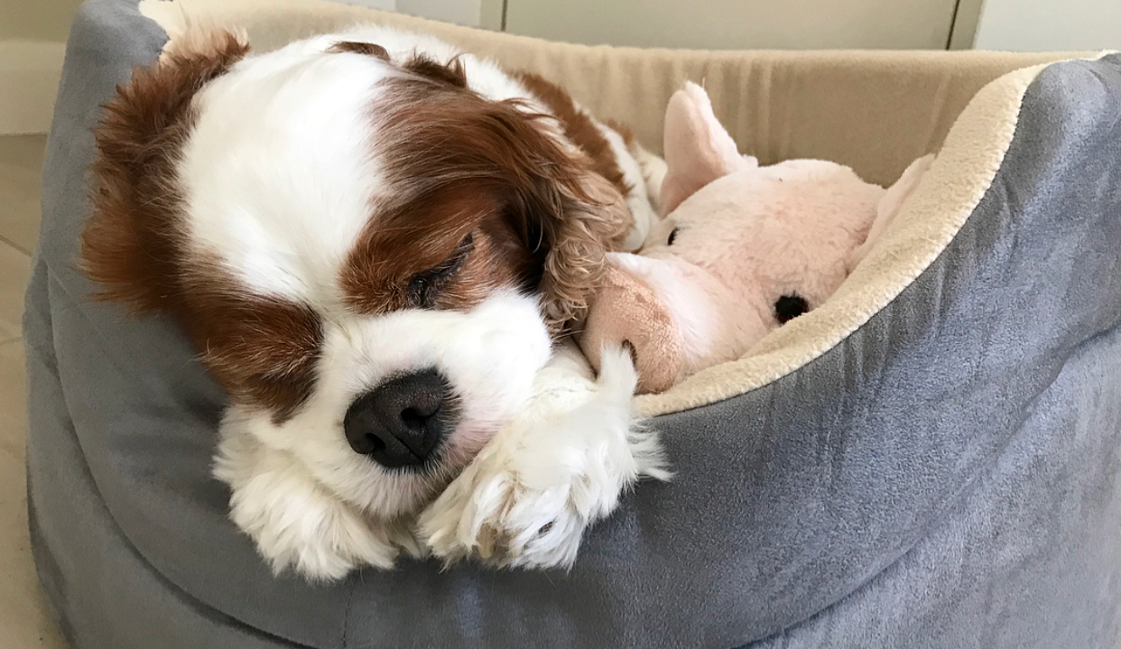 Cooper cuddling with his little piggie.
