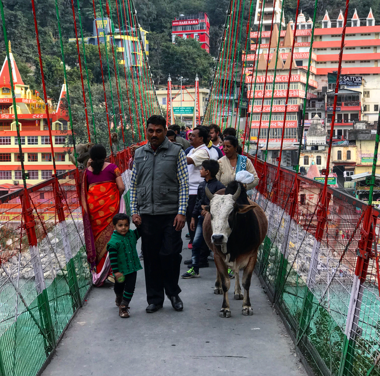 Man, son and cow.