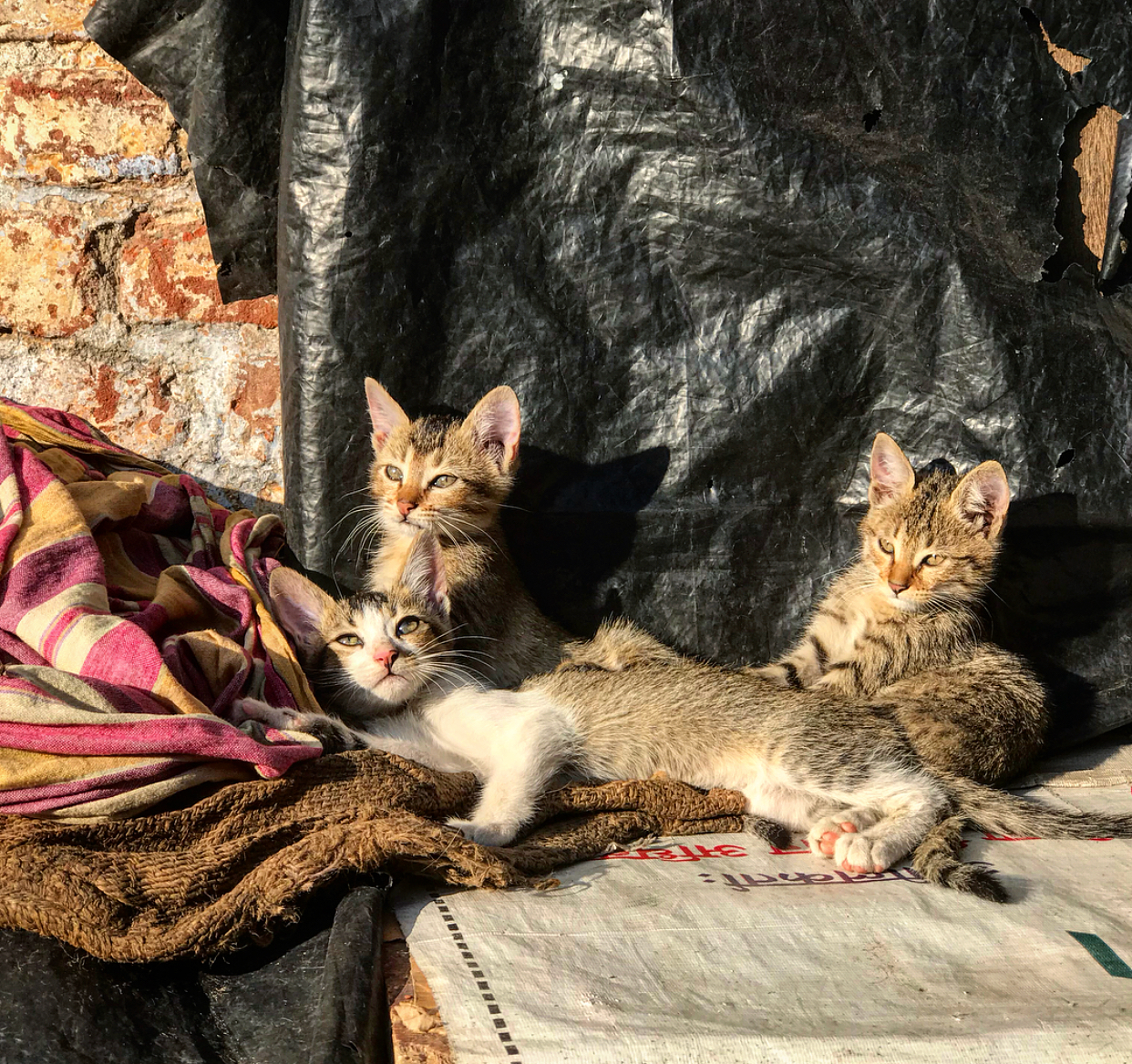 Street kittens (which you don't see many of, maybe due to the copious amount of street dogs).