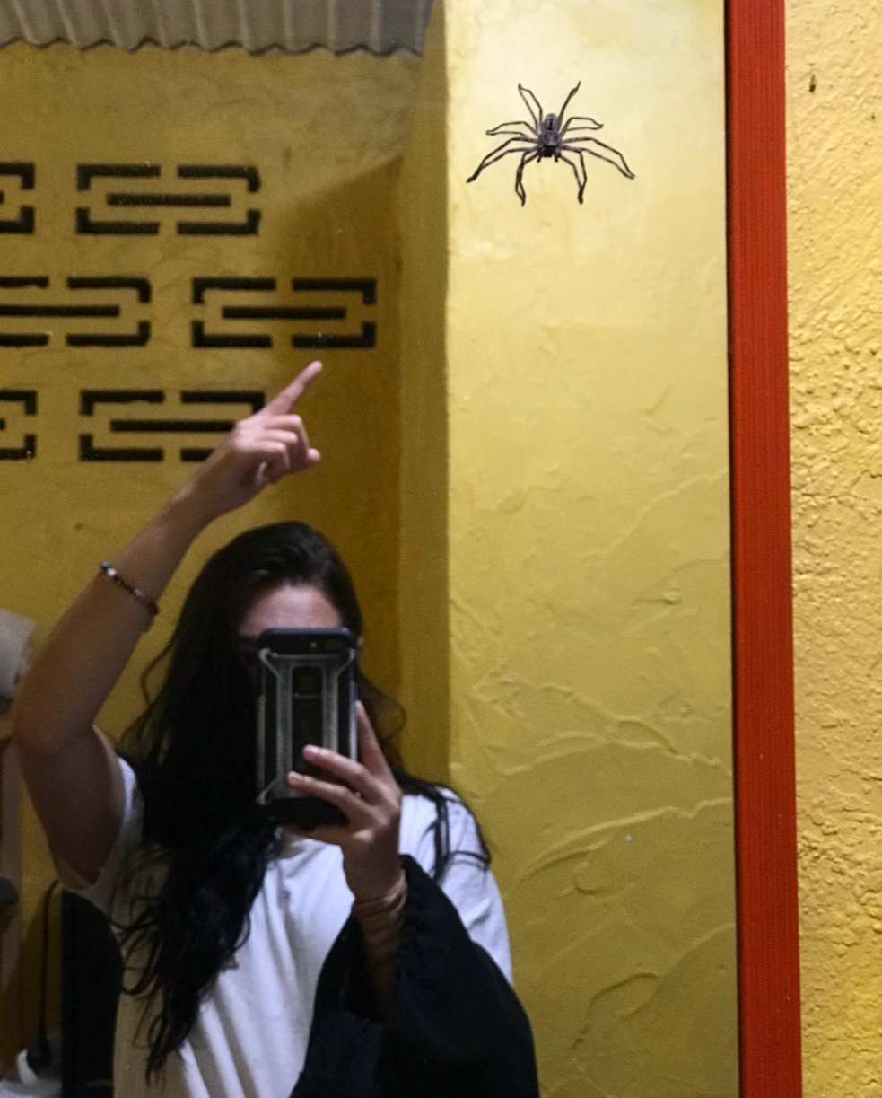 Just one of the gigantic spiders living in our communal bathroom!
