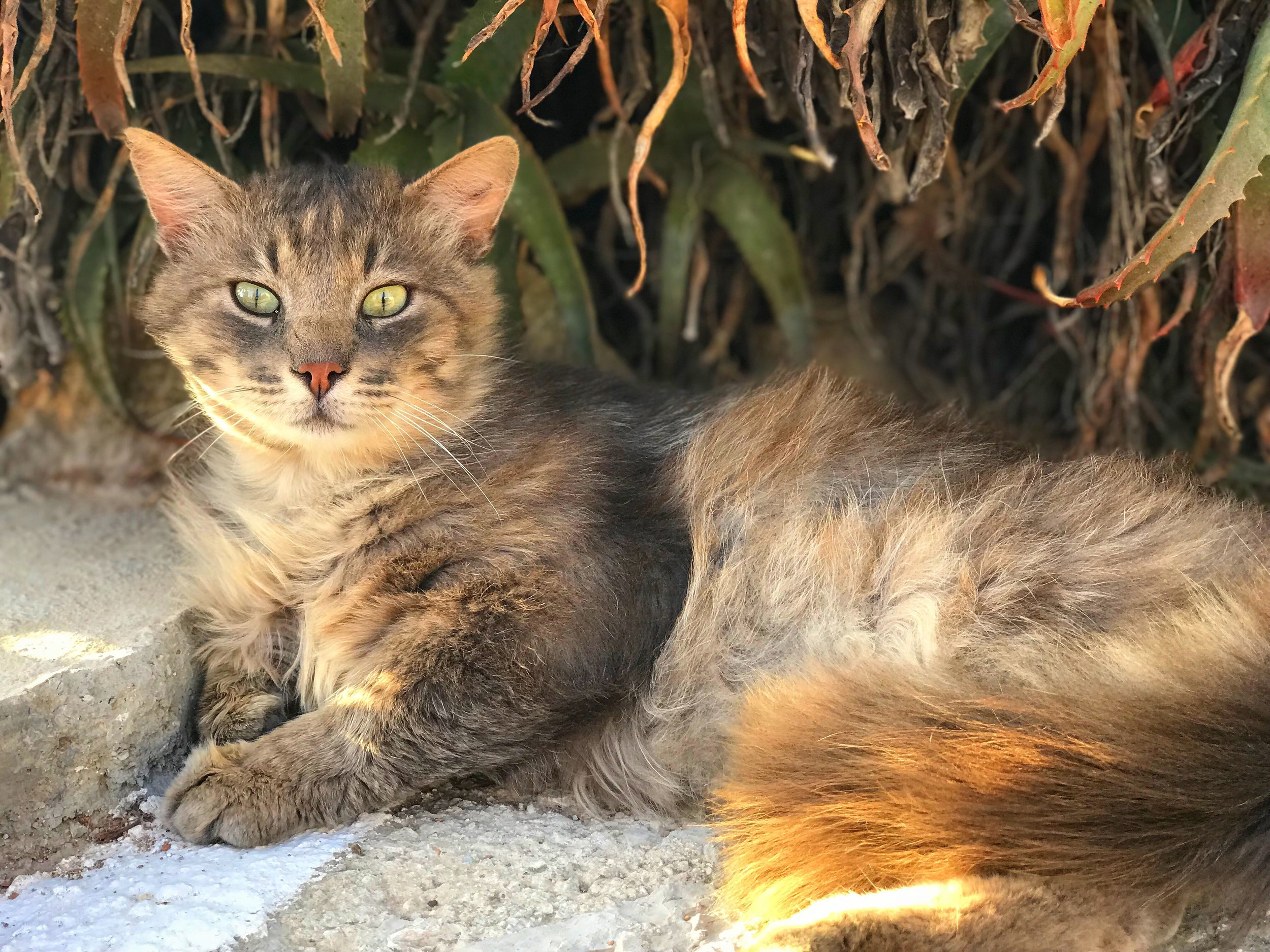 A beautiful stray cat who I found taking shade under an aloe vera plant at the retreat. I was captivated by those beautiful, green eyes.