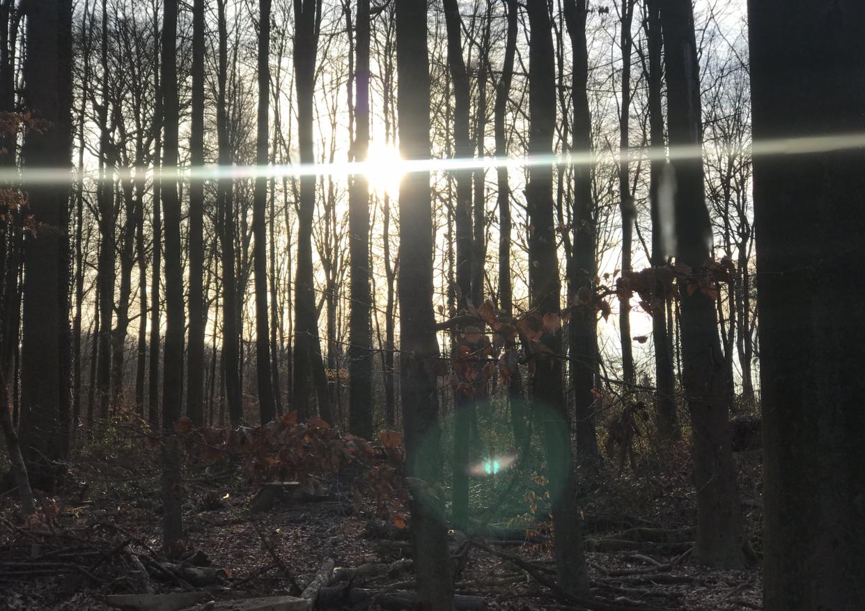 A beautiful halo around the orb (nature spirit).