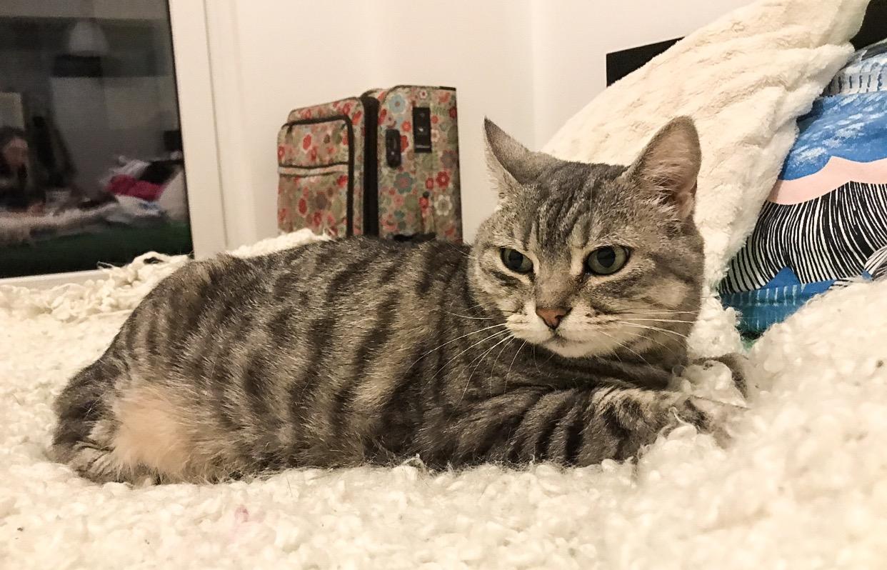 Eli's beautiful cat, Marilyn.