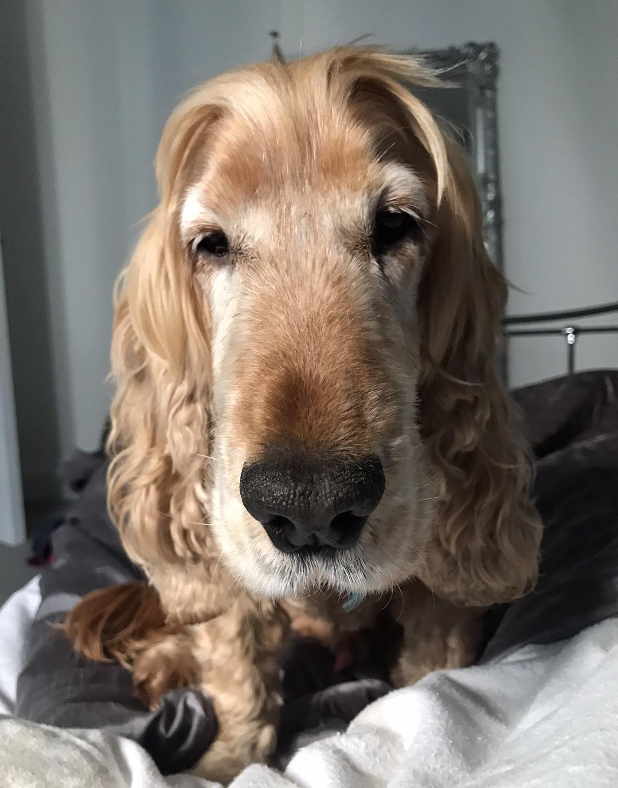 So good to see my brother aka mum's dog Yanni.