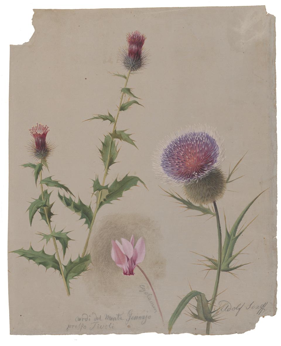 Adolf Senff: Disteln und Alpenveilchen, 1809‑1863, Öl auf Papier, 290 x 240 mm | Kulturstiftung Sachsen‑Anhalt – Kunstmuseum Moritzburg Halle (Saale) | Foto: Kulturstiftung Sachsen‑Anhalt