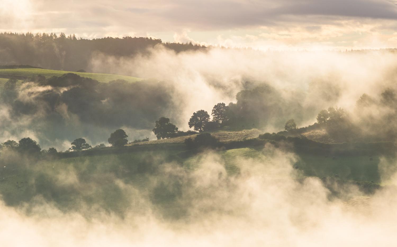 Misty LR 1.jpg