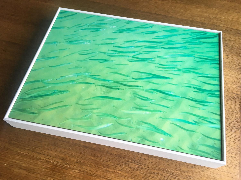 Sandeel print LR.jpg