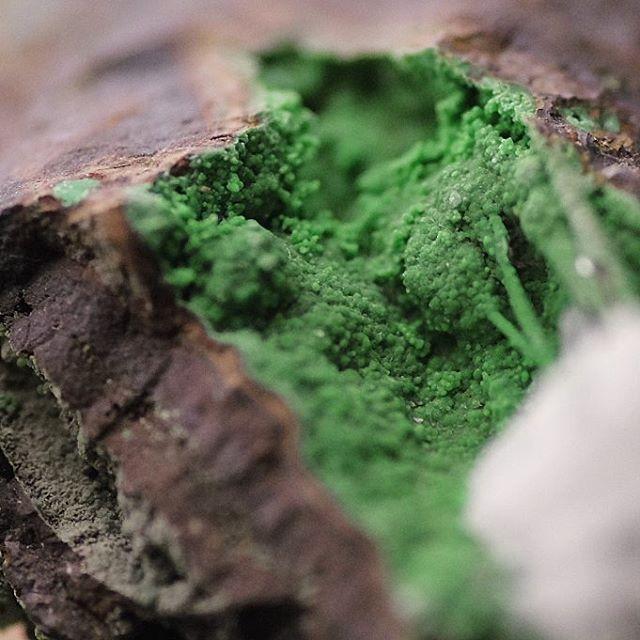 ◼ Crysocholla ◼  #natgeo #splendid_earth #earthfocus #pixel_ig #awesomeearth #picoftheday #minerals #crystallove #stones #gemology #crystals #beautiful #igdaily #fineminerals #love #gem #gems #crystal #igers #instagood #gemsandminerals #mineralogy #naturalstones #rawgems #rawstones #geology #follow4follow