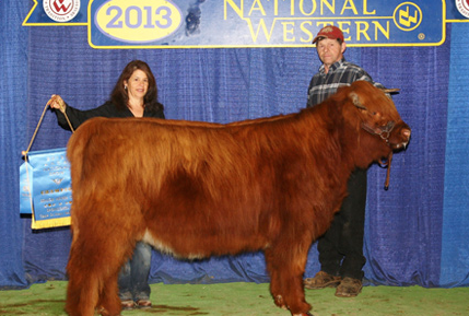 Shat Acres Raisin Brandy, 2011 Roll of Excellence Female, 2017 Grand Champion Cow/Calf, National Western Stock Show, Denver, CO