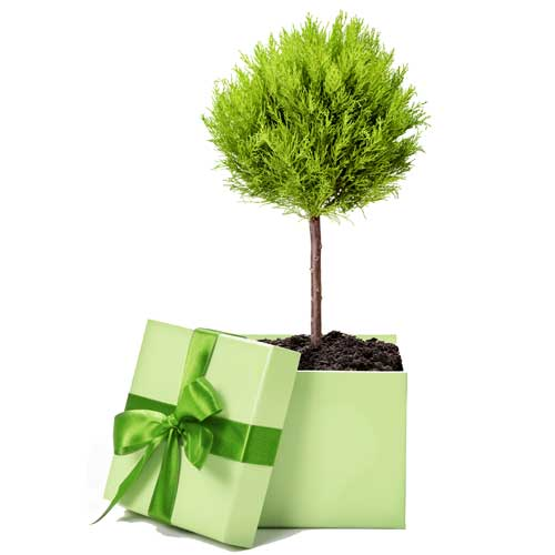 Tree & Garden Gift Company  :  The Tree and Garden Gift Company provides a unique and easy solution for choosing and planting trees, whether for yourself or for a friend.