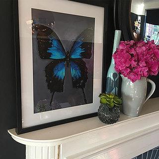 Butterfly £35.00