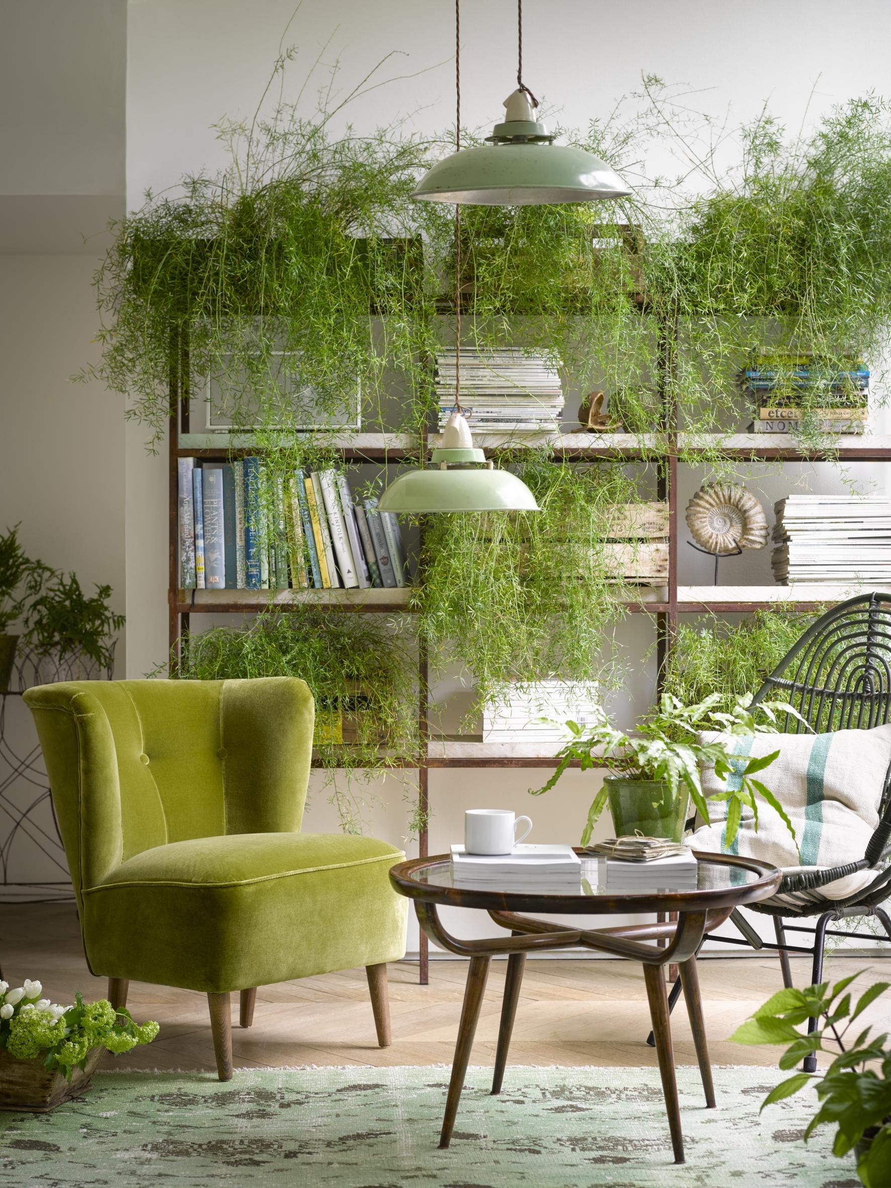 Betty armchair in Olive pure cotton matt velvet - Sofa.com