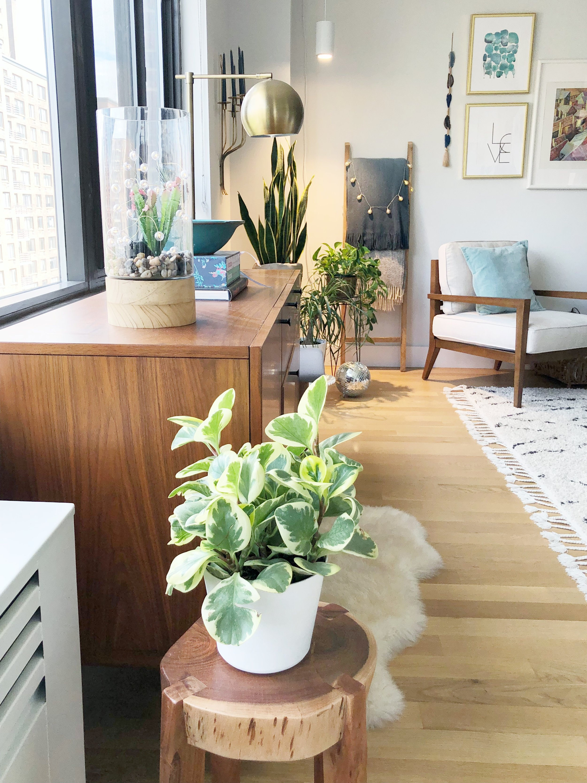 Plants make people happy, especially me! Adding a natural touch of greenery does so much for a room!