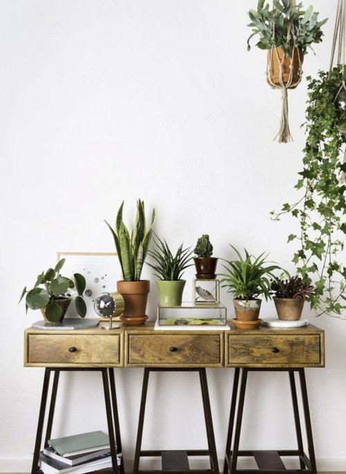 Image Credit The Joy of Plants