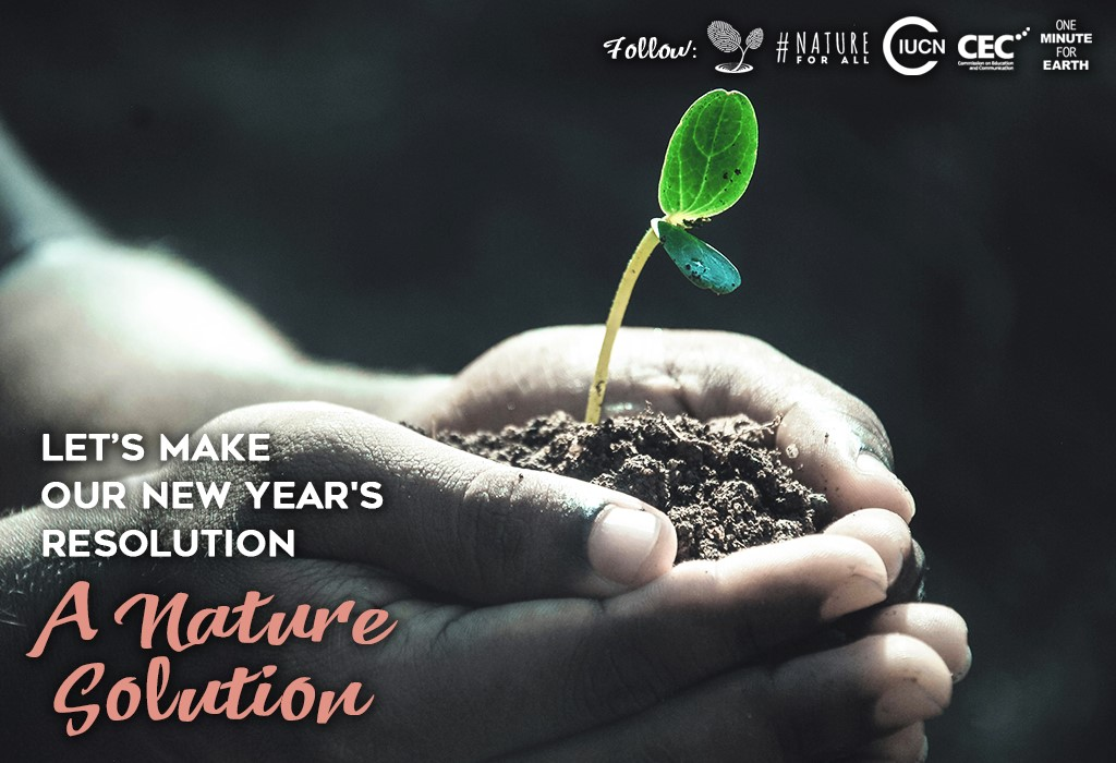 Image result for nature in the new year
