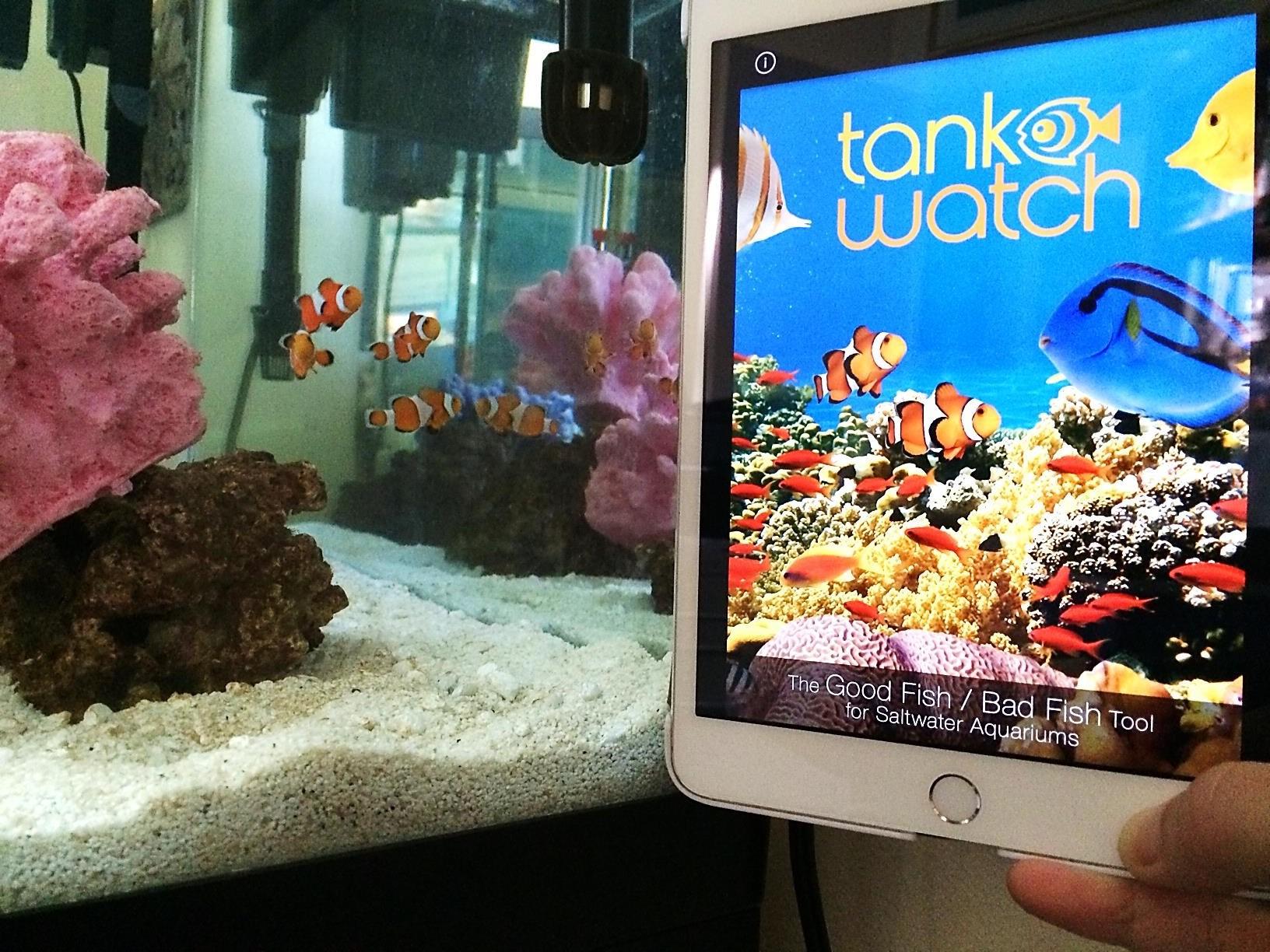tank watch 2.jpg