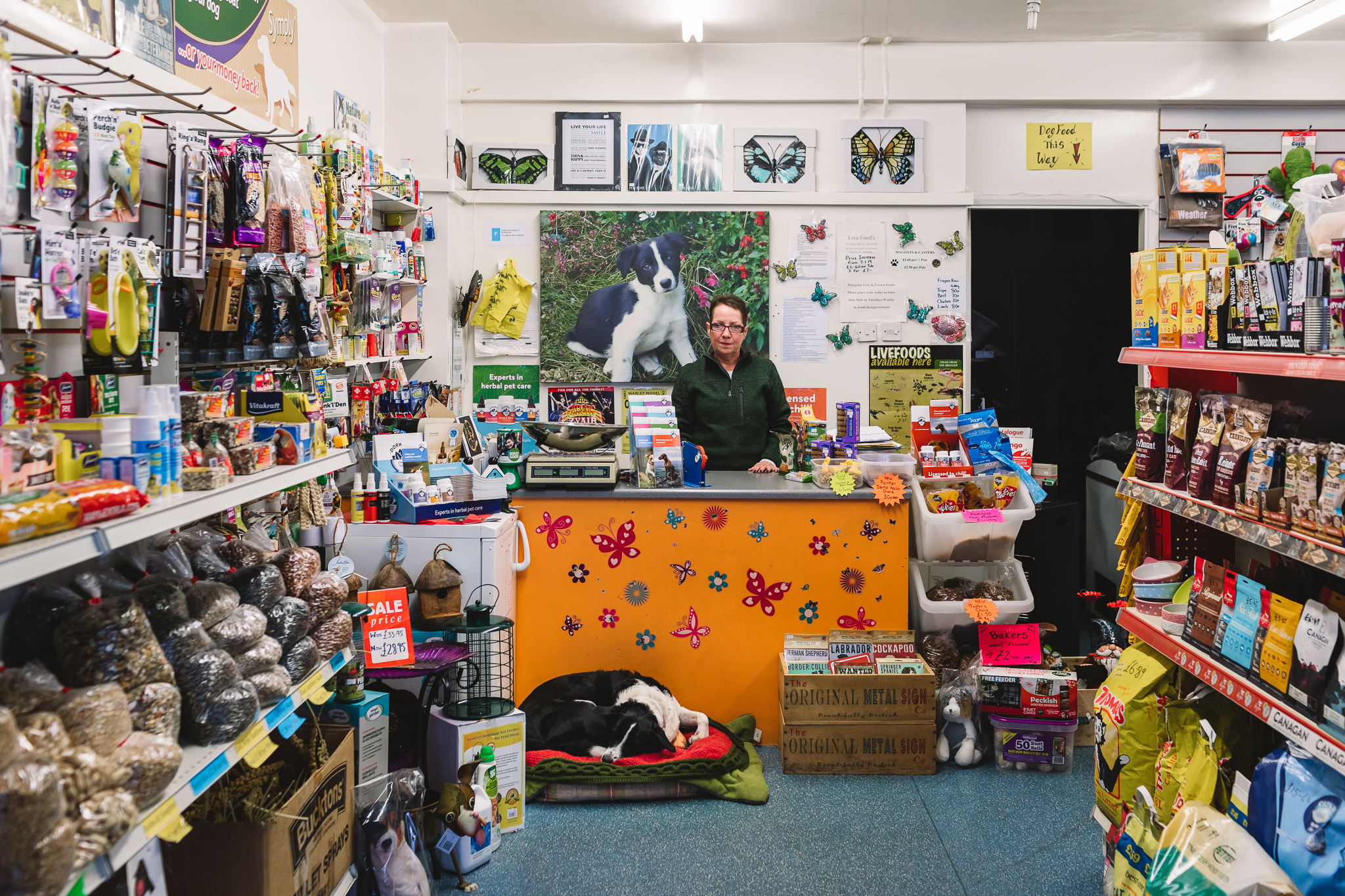 Wide image inside of a pet shop, there is shelves stacked full of goods for pets leading to a counter with the woman shop keeper behind, wearing a green jumper and purple glasses and short hair. In front of the orange counter adorned with flower and butterfly stickers there is a black and white dog lying down.