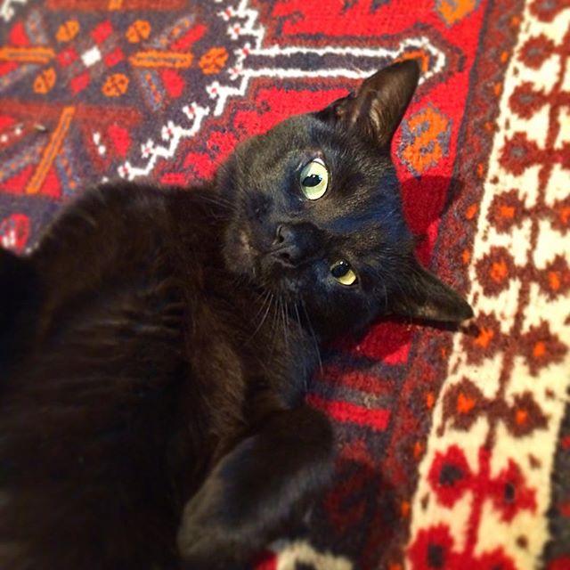 Image result for black cat in bath
