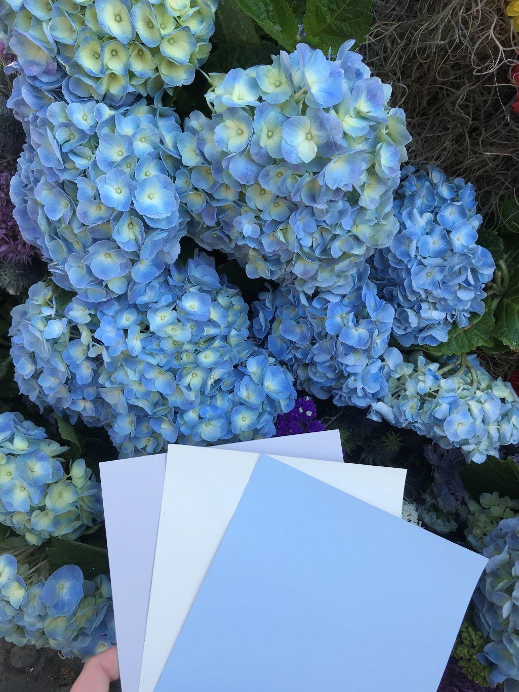 Irises create a fresh and playful scheme: Irises, Gamboge, Pollen, Slate II