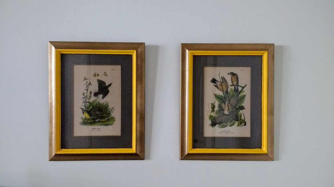 Beneath the Crust: diy decor: updating vintage audubon prints