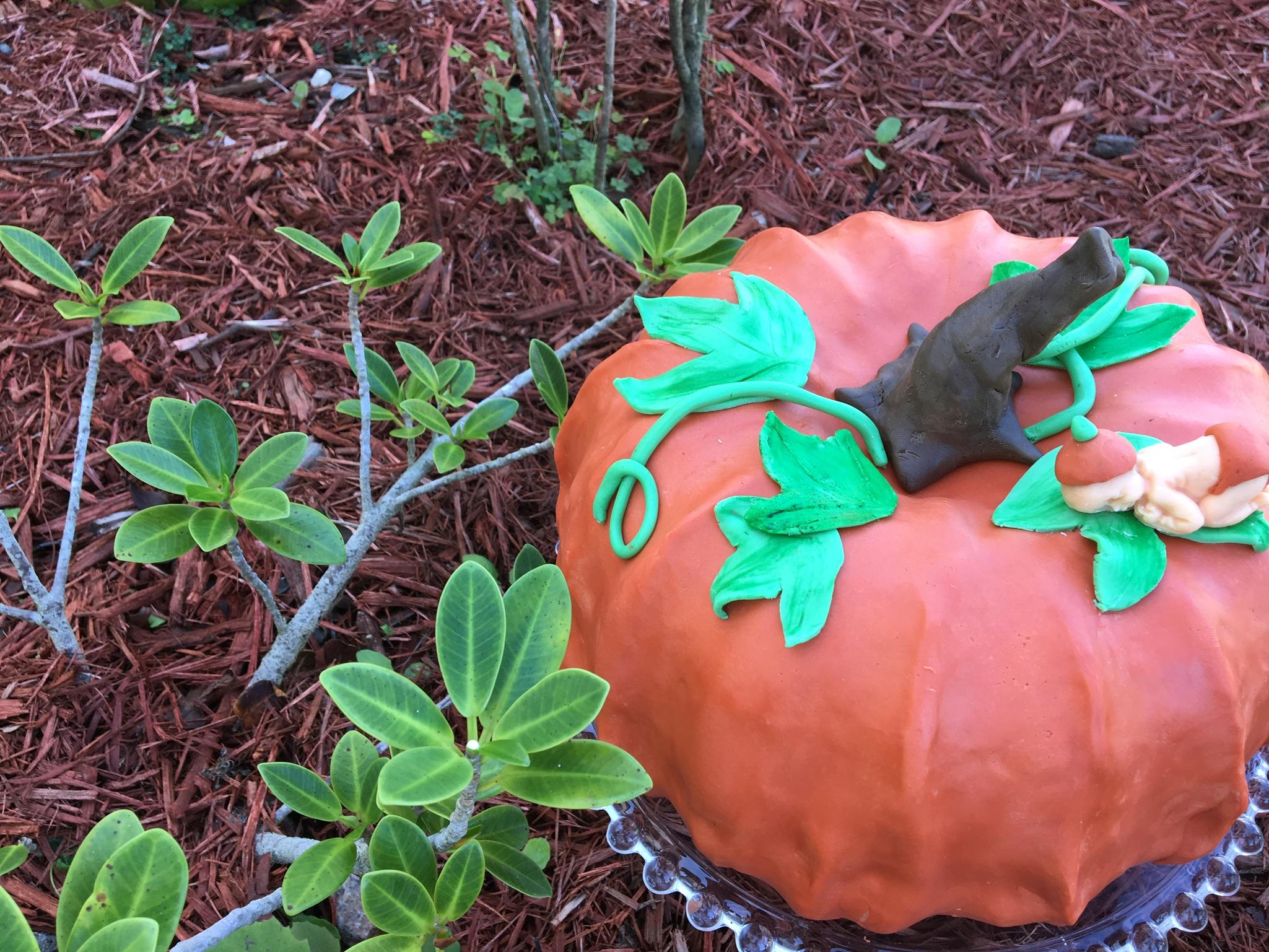 Oh look, a little pumpkin patch!