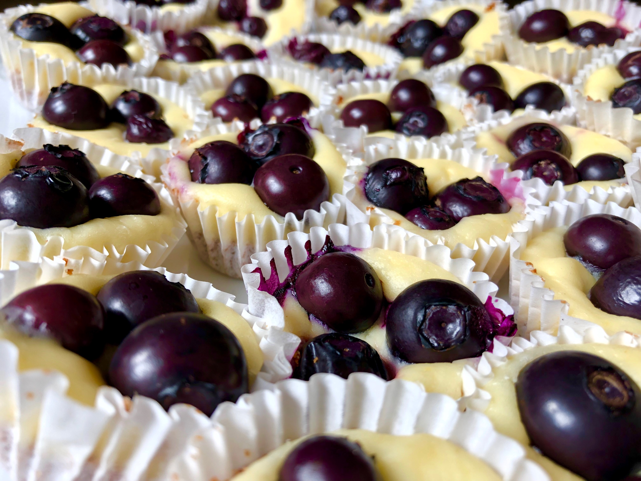 lemon blueberry cheesecake bites