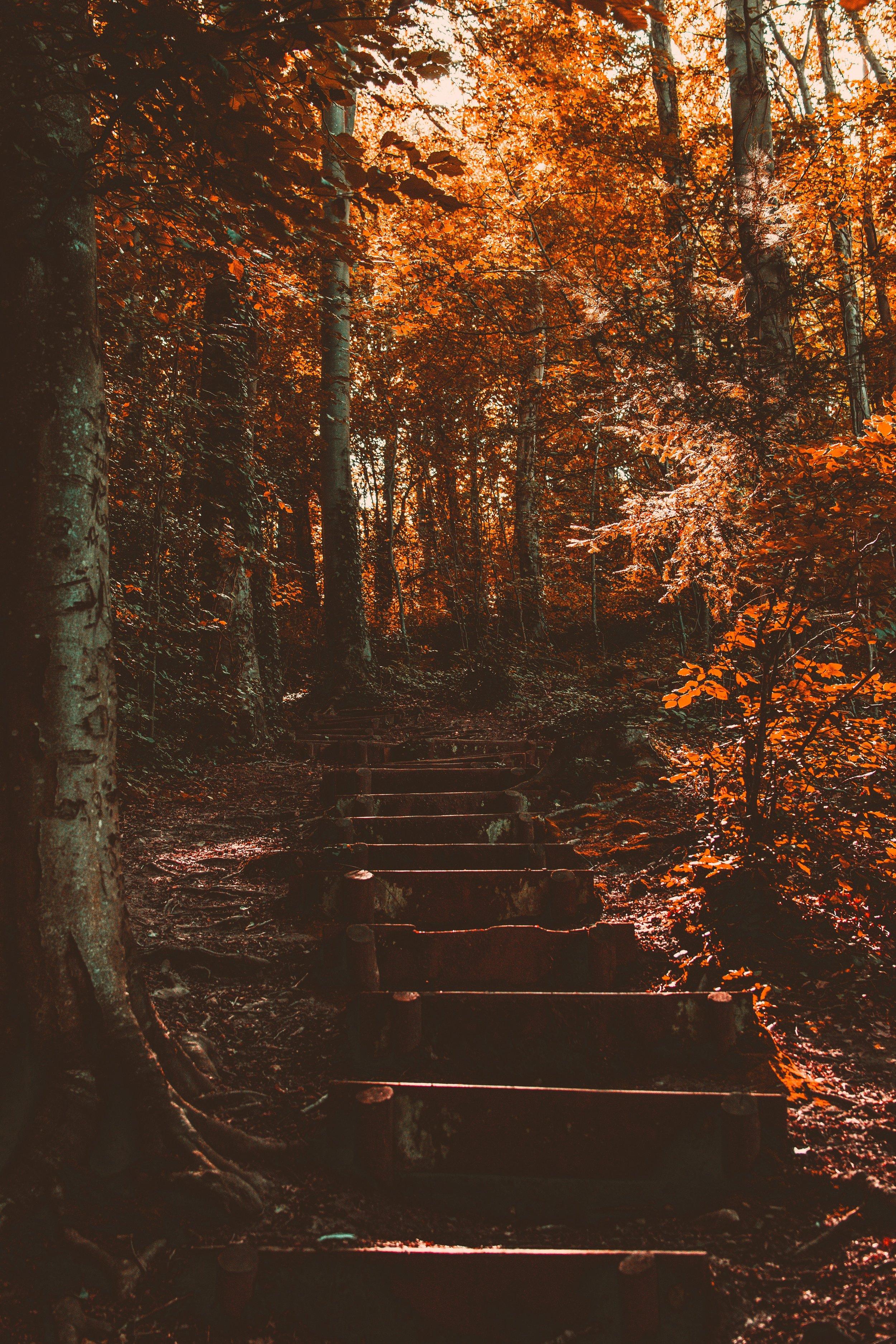 autumn-environment-fall-2812164.jpg
