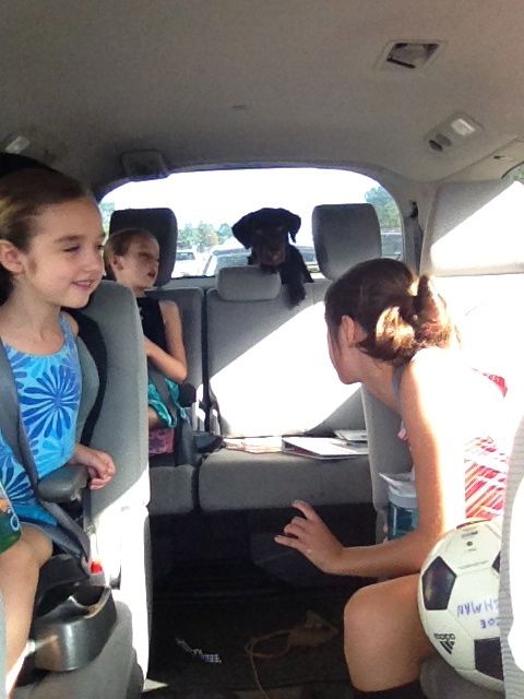 Piper loves riding in the swagger wagon.
