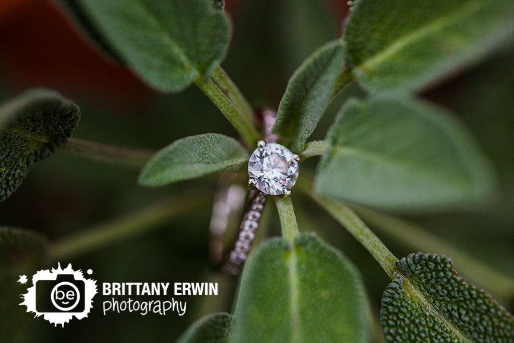 Broad-Ripple-Indiana-engagement-photographer-ring-detail-lambs-ear-Brittany-Erwin-Photography.jpg