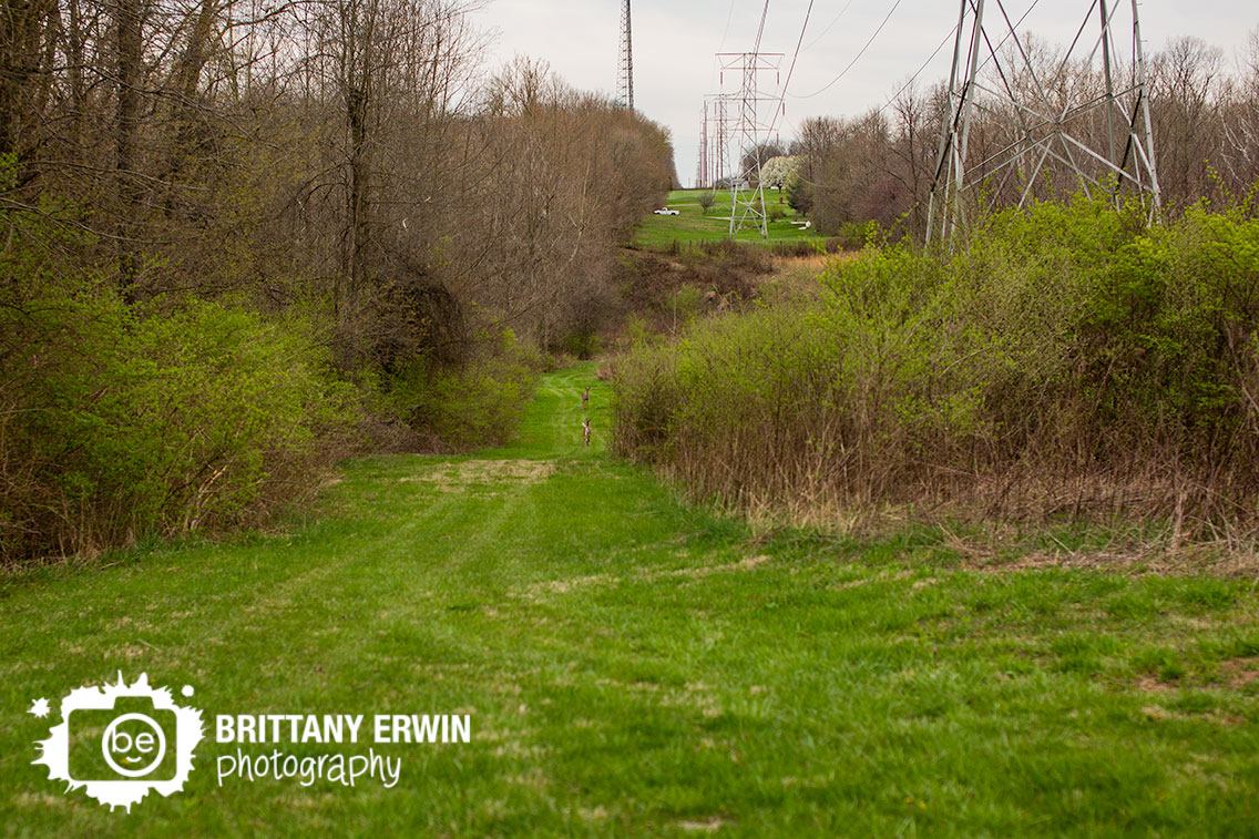 Camby-Indiana-photographer-deer-down-valley-path.jpg