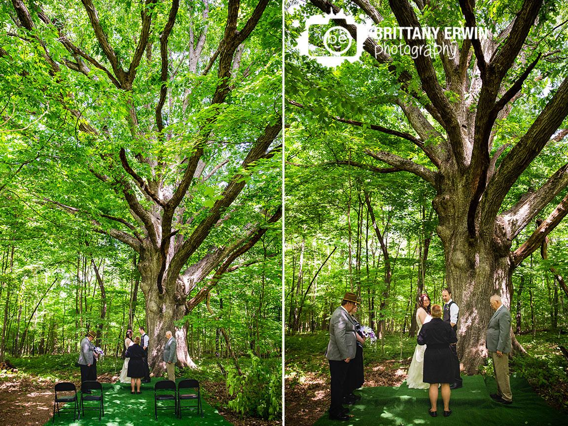 centurys-old-tree-ceremony-site-elopement-small-wedding.jpg