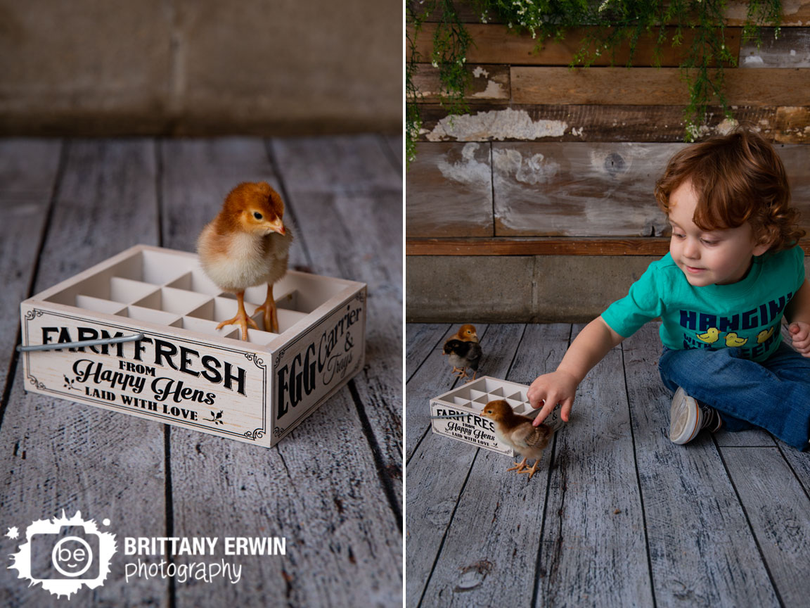 Indianapolis-studio-photographer-baby-chicks-spring-easter.jpg