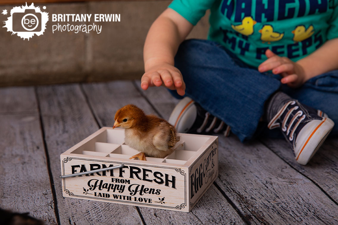 Indianapolis-baby-chick-photographer-toddler-spring-easter.jpg