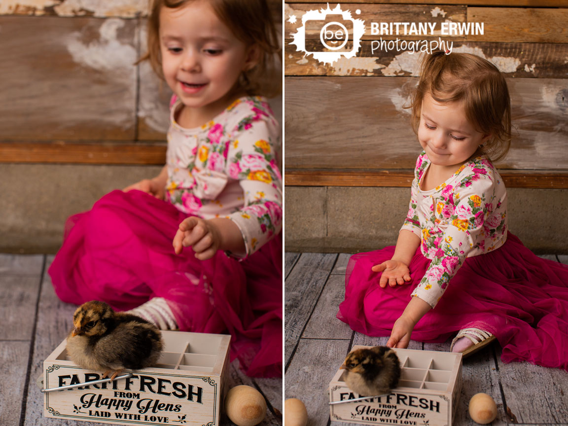 Indianapolis-portrait-photographer-baby-chick-spring-mini-session-farm-fresh-from-happy-hens-egg-crate.jpg