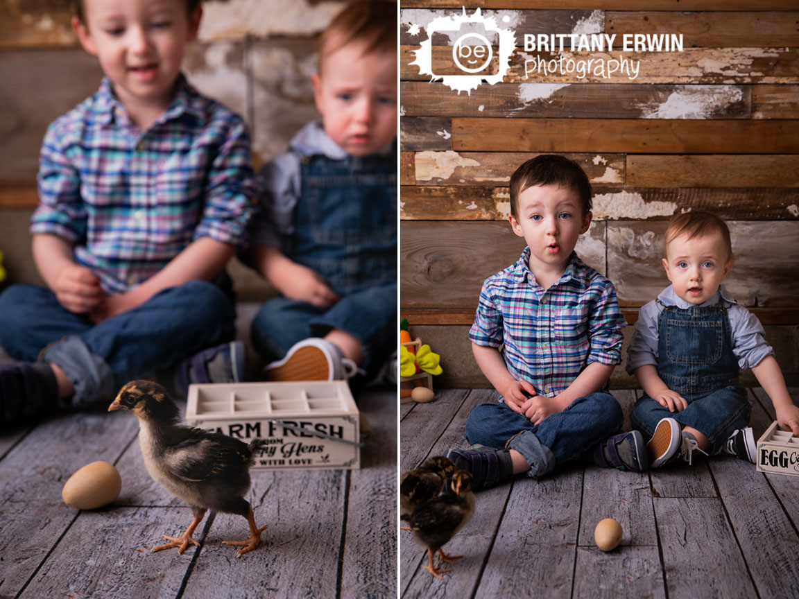 Indianapolis-studio-portrait-photographer-chick-baby-chickens-mini-spring-session.jpg
