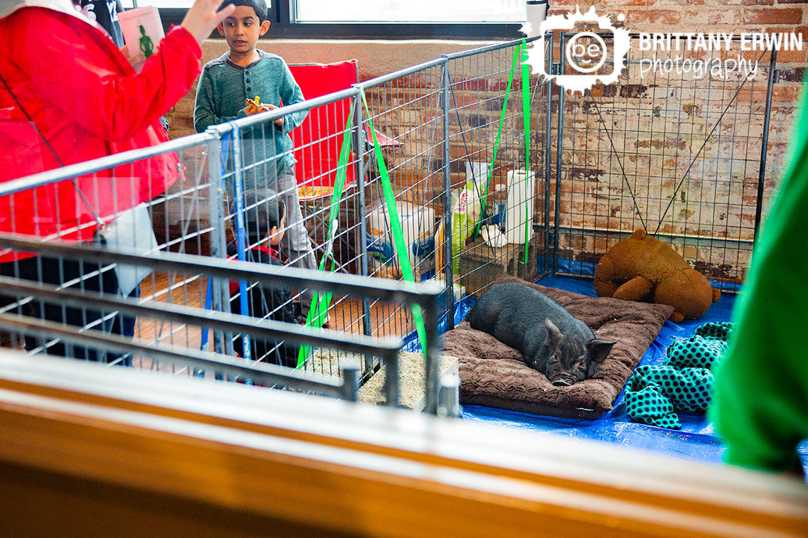 Indianapolis-event-photography-pig-sanctuary-Indy-VegFest.jpg