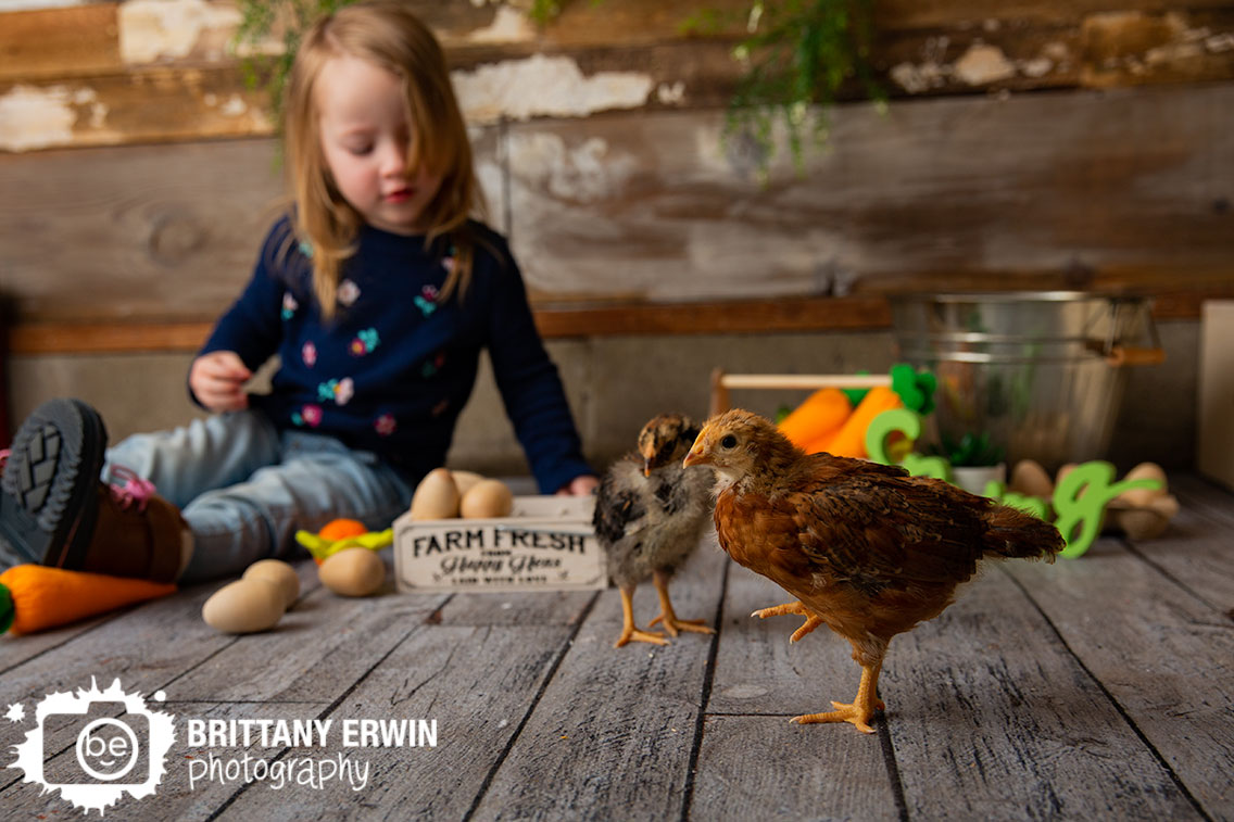Indianapolis-portrait-photographer-baby-chicks-farm-fresh-eggs-crate-spring-mini-toddler.jpg