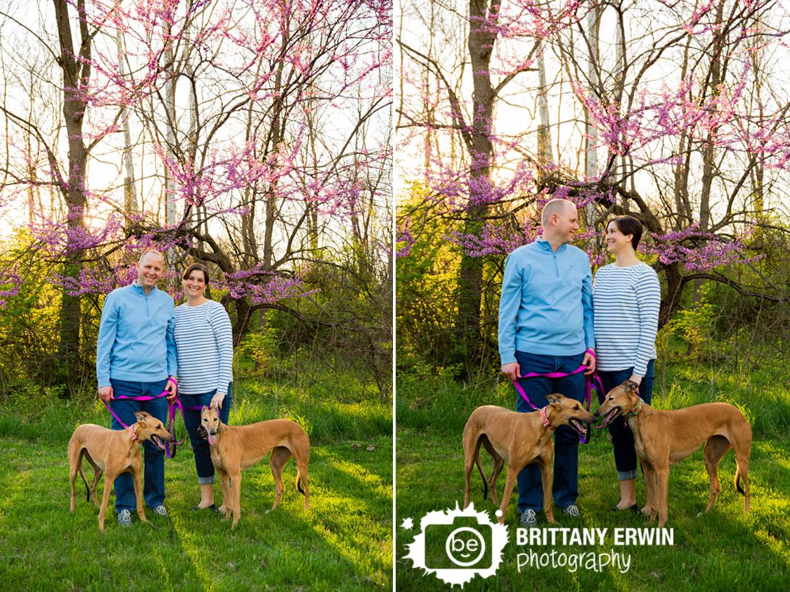 Indianapolis-portrait-photographer-sunset-spring-redbud-greyhound-pair.jpg
