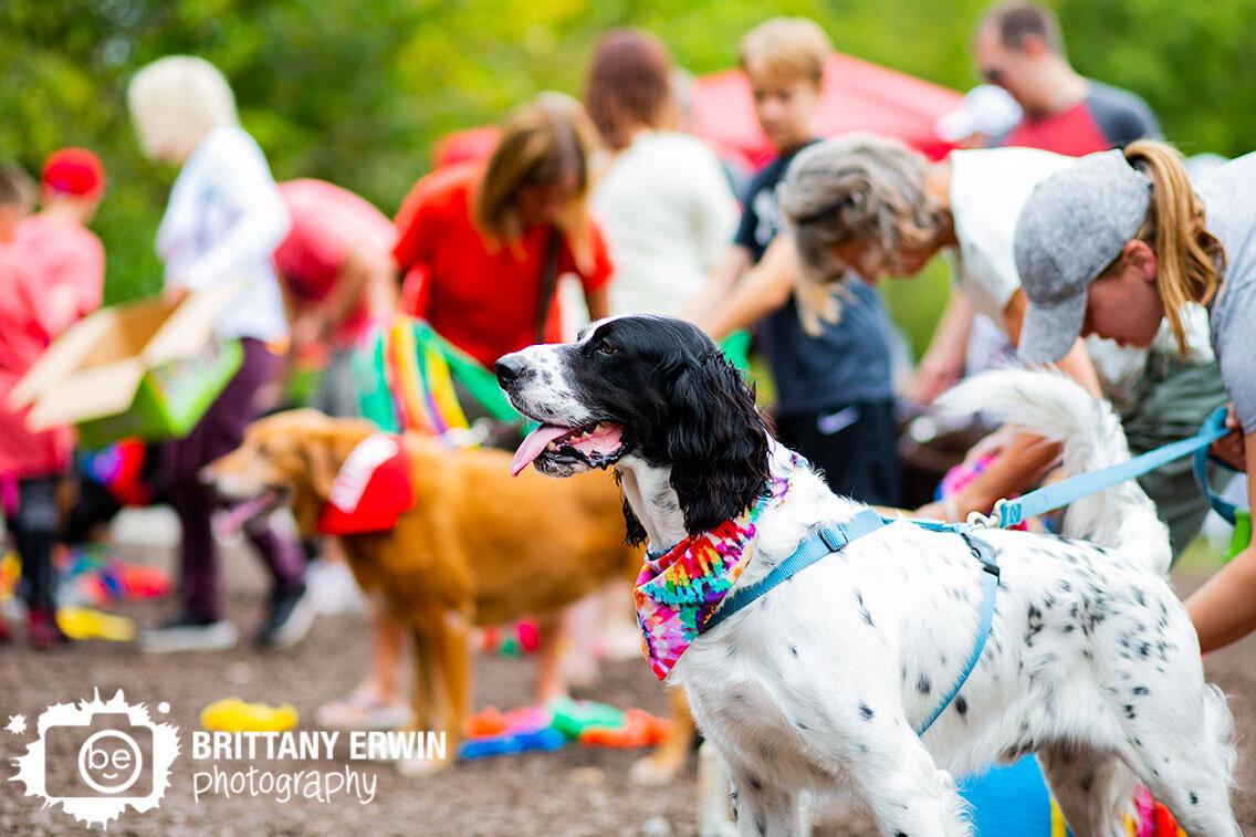 Love-of-Labs-Indiana-lolin-labapalooza-pets-at-dog-games.jpg